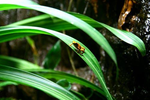 Photos gratuites de forêt tropicale, forêt tropicale humide, grenouille, nature