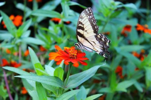 Photos gratuites de ailes, fleur, jardin, nature
