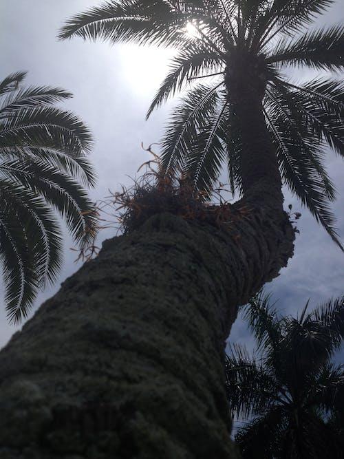 Photos gratuites de nature, palmier, palmiers, paradis