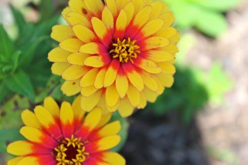 Photos gratuites de fleur, jardin, jardin de fleurs, jaune
