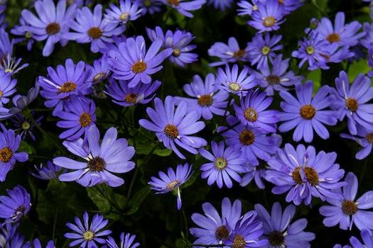 Free stock photo of field, flowers, summer, purple