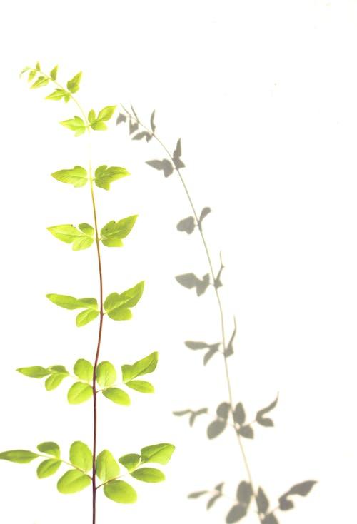Foto stok gratis alam, bayangan, daun hijau, hijau