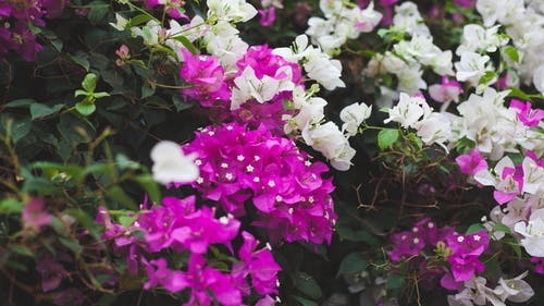 Foto profissional grátis de flores, flores bonitas, flores lindas
