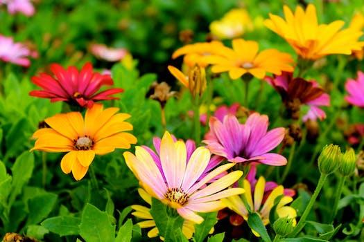 free stock photo of nature field flowers summer - Flower Garden