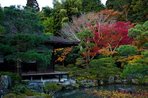 Ilmainen kuvapankkikuva tunnisteilla japanilainen puutarha, Syksy