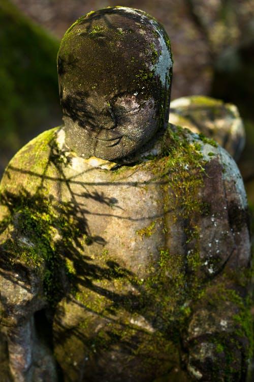 Immagine gratuita di muschio, statua