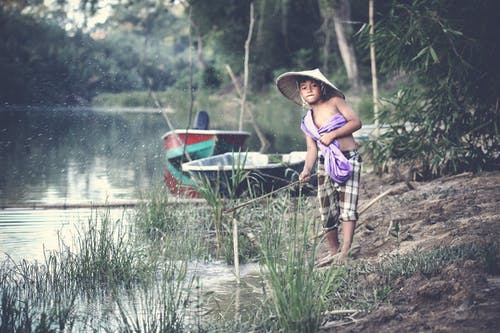 Foto d'estoc gratuïta de aigua, arbres, barques, boscos