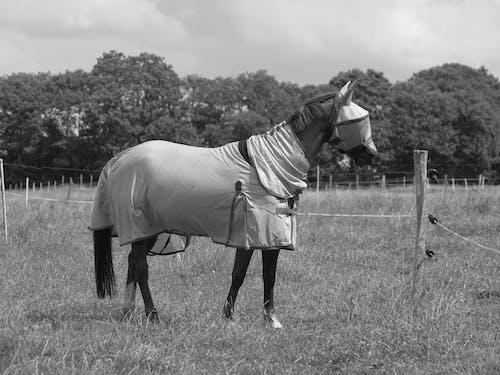 Gratis arkivbilde med beskyttelse, champ, cheval, couverture
