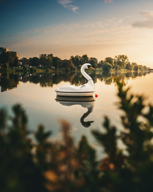 Swan Boat On Lake