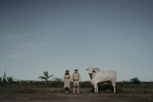 A Couple Posing Beside A Cow