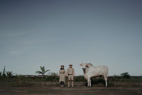 Immagine gratuita di agricoltura, animale, azienda agricola, bestiame