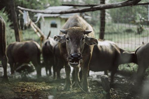 一群動物, 下田, 動物園, 哺乳動物 的 免費圖庫相片