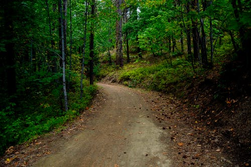 Бесплатное стоковое фото с дорога, лес