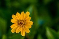 field, summer, garden