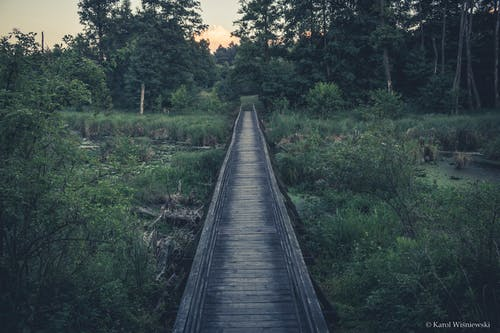 Free stock photo of bridge, nature
