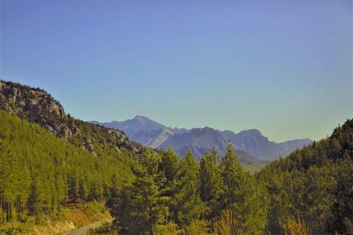 Δωρεάν στοκ φωτογραφιών με bitki, βουνά, γυαλί, δασικός