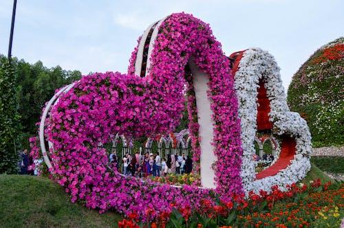 Free stock photo of flower garden, flower heart, garden, heart