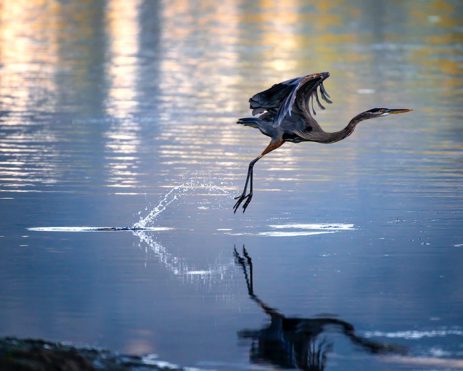 การถ่ายภาพสัตว์, ขน, ทะเลสาป