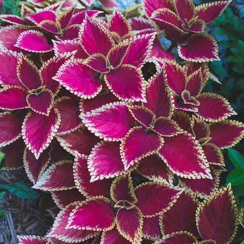 Foto profissional grátis de arte da flor, árvore flor, cor-de-rosa, ecológico