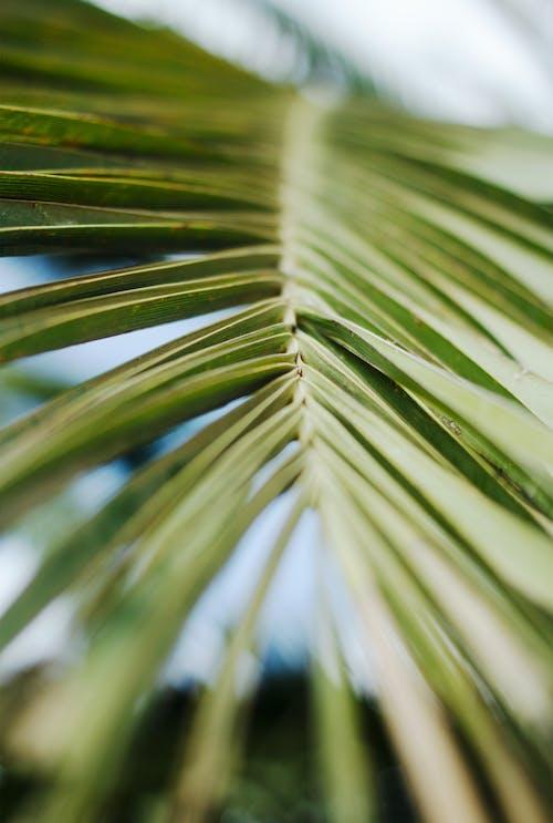 Základová fotografie zdarma na téma hloubka ostrosti, listy, palmový list, rostlina