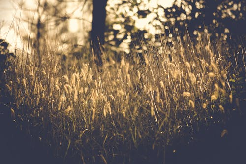 Vintage Photo of Grass