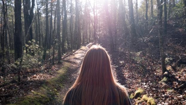 Kostenloses Stock Foto zu landschaft, natur, mädchen, wald