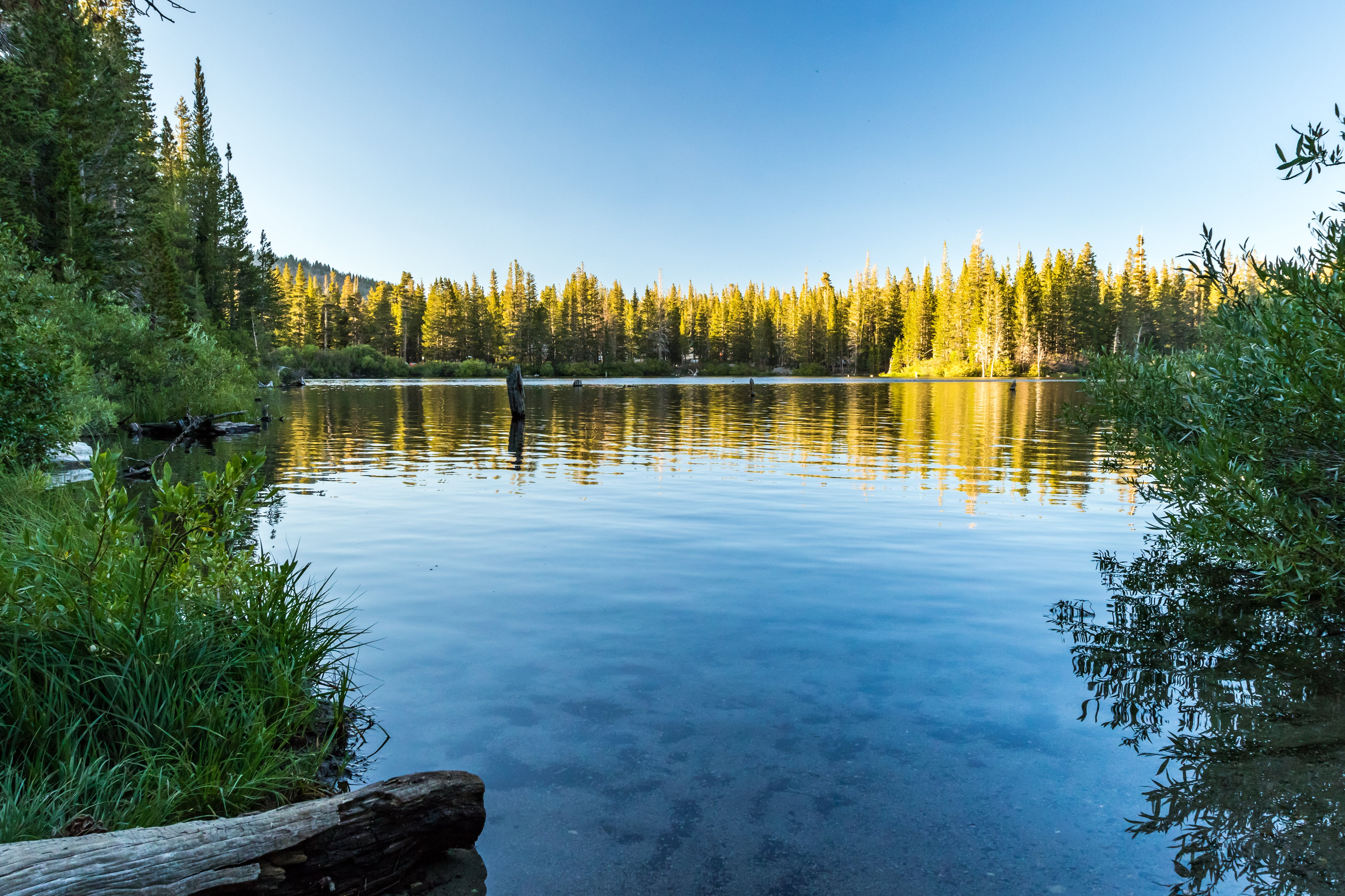 Free stock photo of blue, california, forest, lake