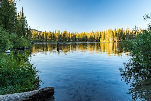 Free stock photo of blue, forest, mammoth lakes