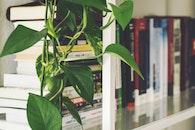 summer, books, office