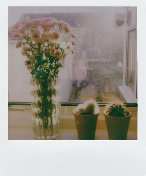 คลังภาพถ่ายฟรี ของ กล้องถ่ายรูปยี่ห้อโพเลอะรอยด, การจัดดอกไม้, ด่วน, ดอกไม้