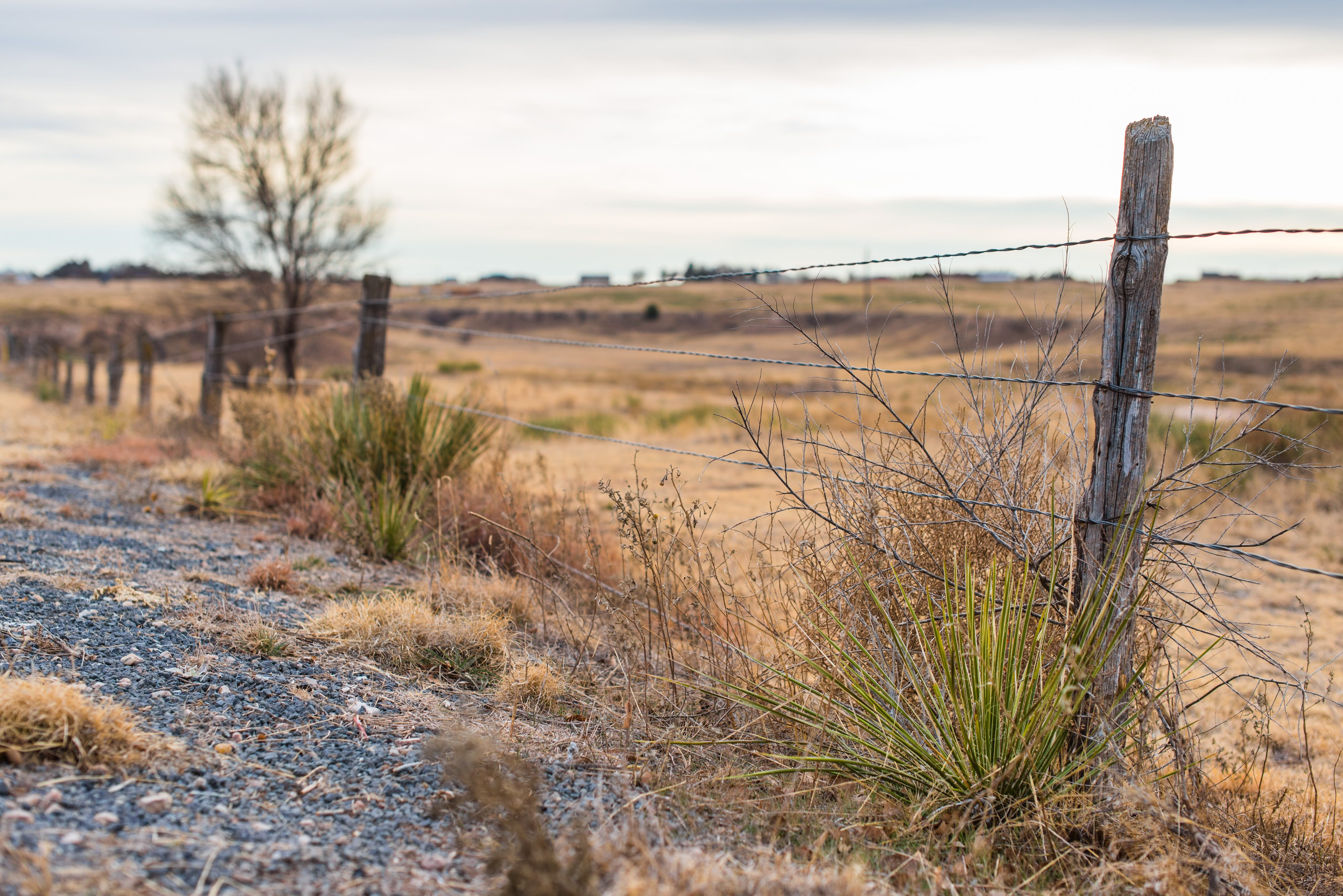 Free stock photo of background, barbed wire, barbed wire fence, brown grass