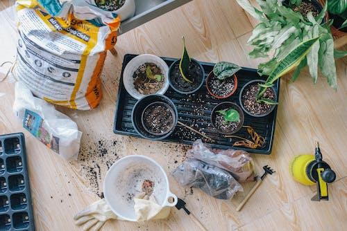 Ingyenes stockfotó asztal, beltéri, beltéri növények, cserép témában