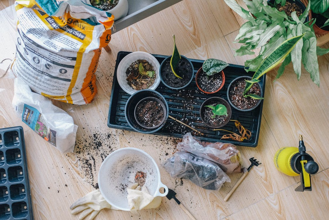 Green-leaved Plants