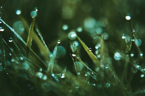 Ingyenes stockfotó csillog, dof, esőcseppek, fókusz témában
