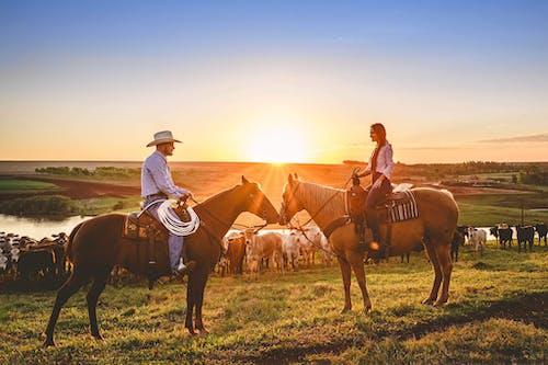 Бесплатное стоковое фото с активный отдых, верховая езда, верхом, восход