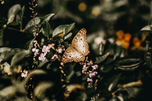 나비, 식물군, 정원의 무료 스톡 사진