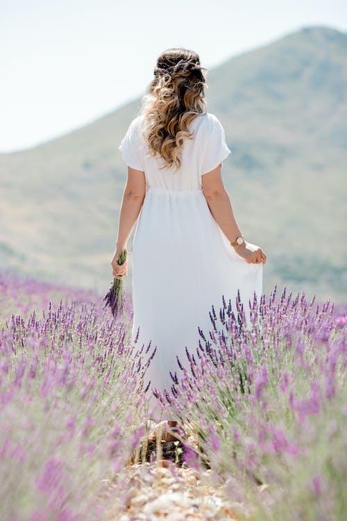 Бесплатное стоковое фото с брак, заводы, красота, лаванда
