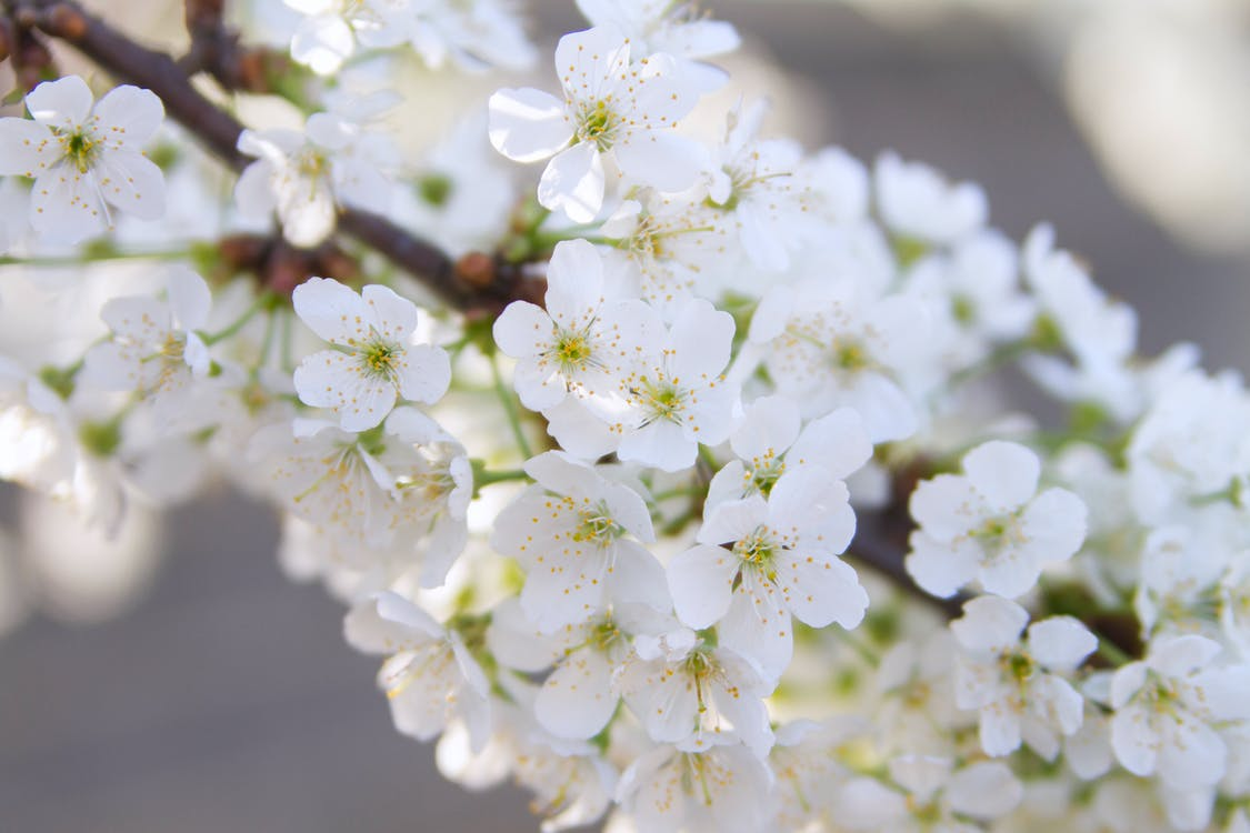 apple, beauty, bloom