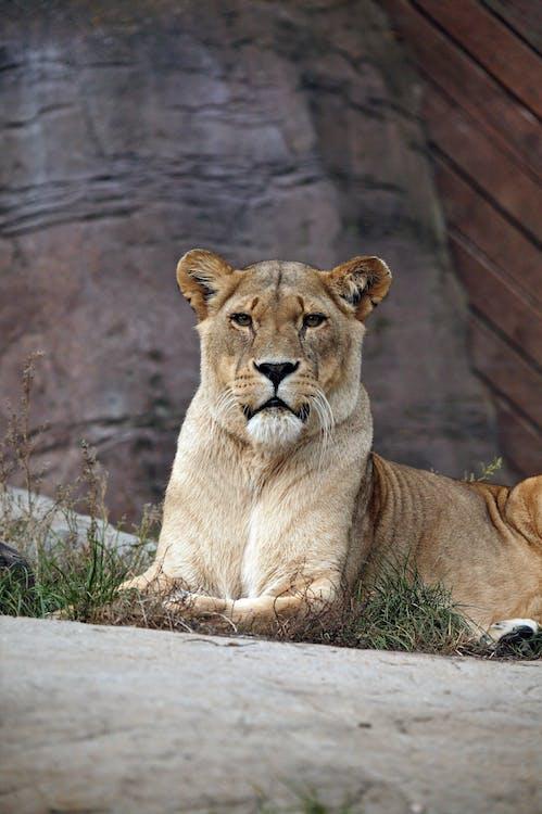 Imagine de stoc gratuită din animal, animal sălbatic, carnivor