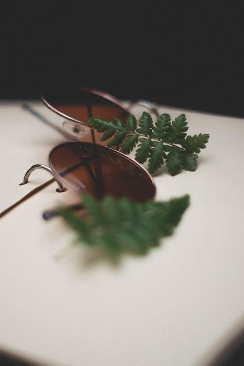 アイウェア, サングラス, 葉, 被写界深度の無料の写真素材