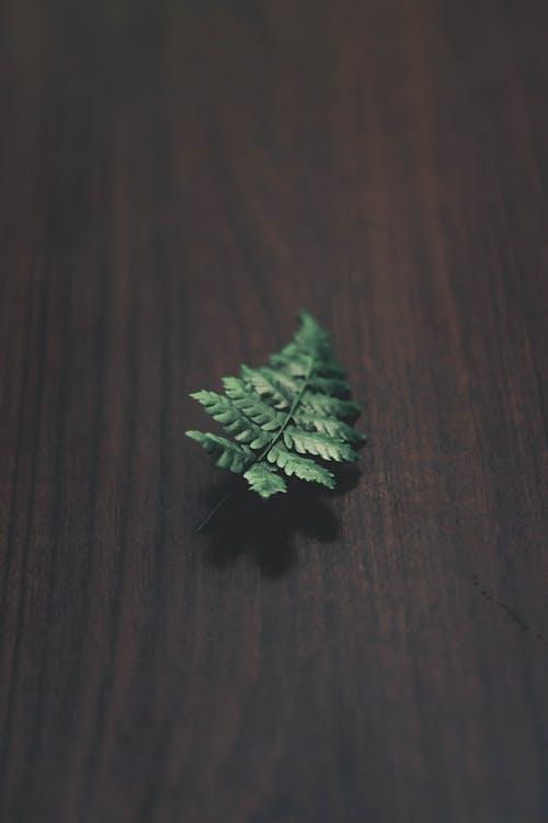 Kostnadsfri bild av blad, fernblad, flora, grönt löv