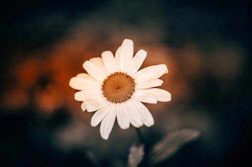 Imagine de stoc gratuită din contrast mare, floare, floare frumoasa, natură