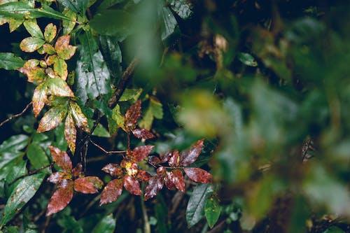 Gratis arkivbilde med anlegg, blader, grønn, tre