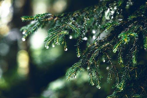 Základová fotografie zdarma na téma mokrý, strom, větev, zelená