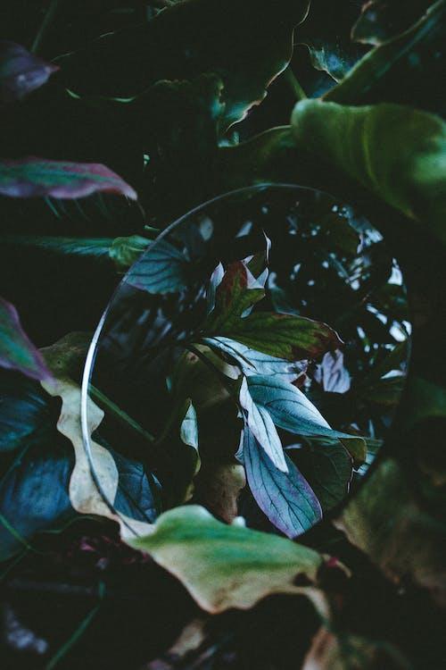 Ilmainen kuvapankkikuva tunnisteilla heijastus, lehdet, peili