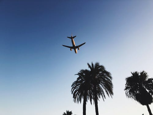 Gratis stockfoto met blauwe lucht, bomen, bromvlieg, buiten
