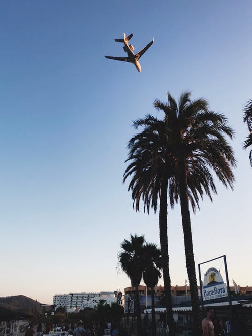 Palmen über Weißes Flugzeug Foto