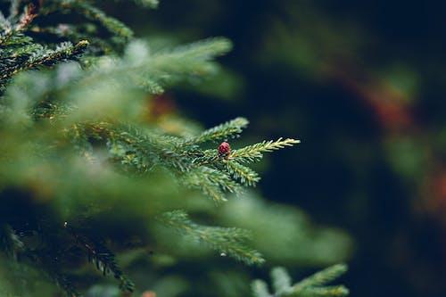 Foto stok gratis berfokus, di luar rumah, hijau, hijau abadi
