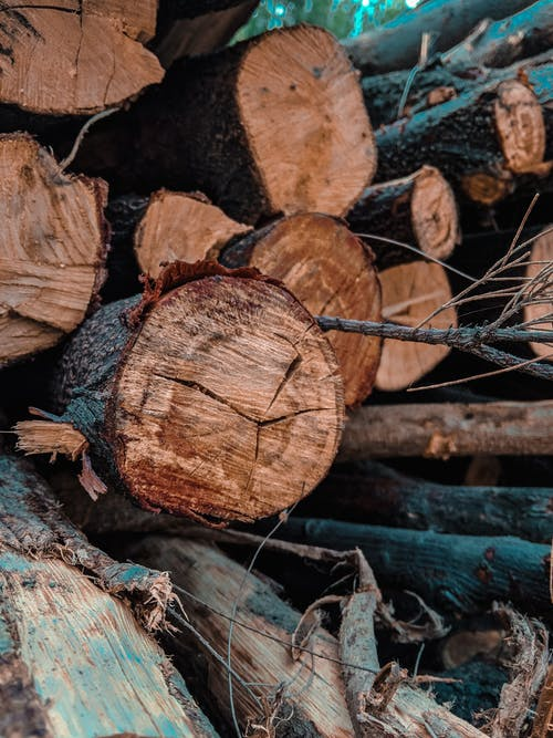 Imagine de stoc gratuită din bușteni, plante tropicale, trunchiuri de copac