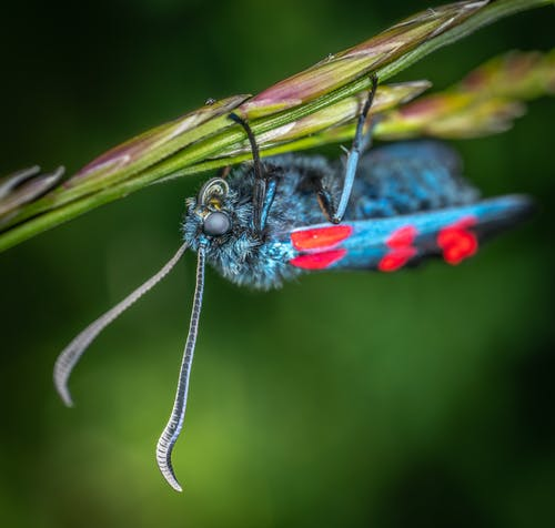 Fotobanka sbezplatnými fotkami na tému hmyz, makro, motýľ